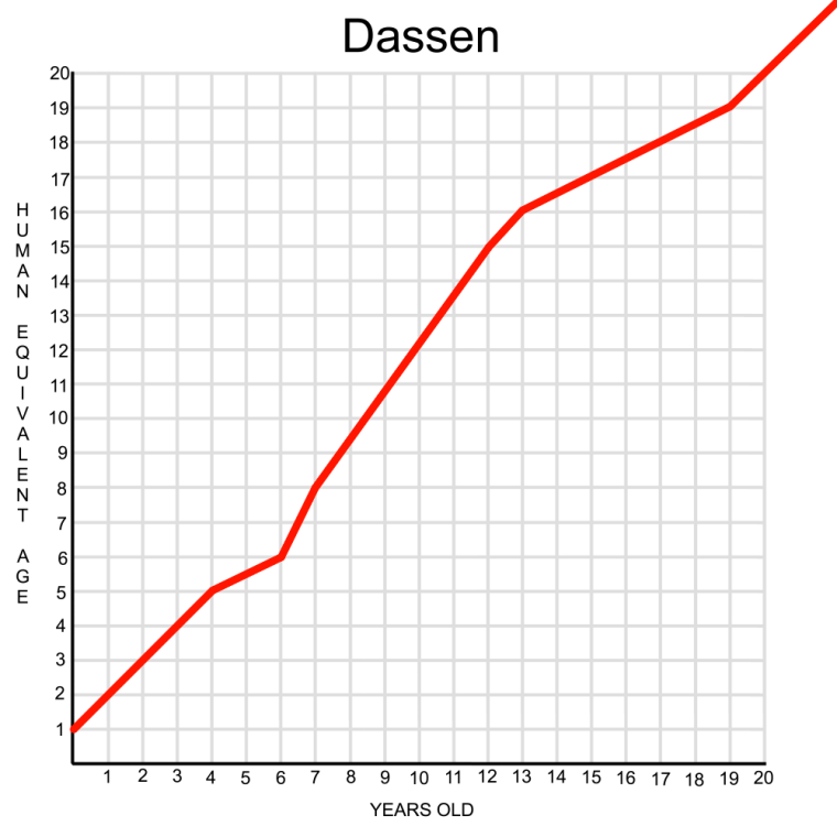 Age Comparison: Dassen